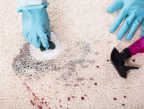 Stain being cleaned off carpet by Parramatta cleaner